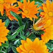 I Love Orange Flowers Poster