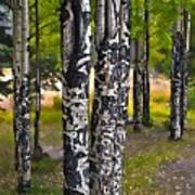I See You - The Aspens Poster