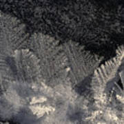 Ice Crystals Form Feather Shapes On Ice Poster