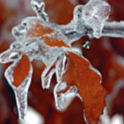 Iced Leaves-2 Poster