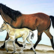 Icelandic Mare And Foal Poster