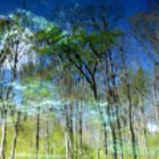 Ichetucknee Reflections Poster