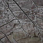 Icy Branches Poster