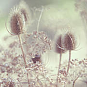 Icy Morning. Wild Grass Poster