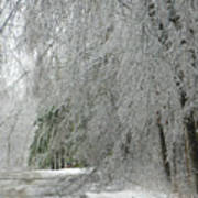 Icy Street Trees Poster