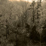 Icy Trees In Sepia Poster