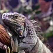 Iguana 338 Poster