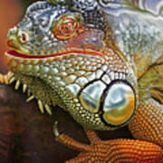 Iguana Full Of Color Poster