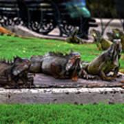 Iguana Trio Poster