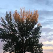 Illuminated Tree Top Poster