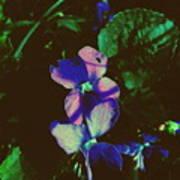 Illuminated Wildflowers Poster