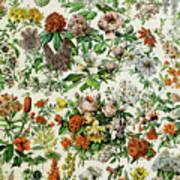 Illustration Of Flowering Plants Poster