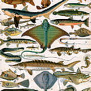 Illustration Of Ocean Fish Poster