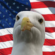 I'm An Eagle, Dammit -- Western Gull And American Flag Poster