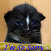 I'm So Sorry Greeting Card Poster