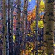 Impression Of Fall Aspens Poster