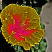 Impressionistic Hibiscus Yellow And Red  Poster