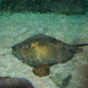 Impressionistic Sting Ray - 003 Poster