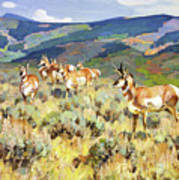 In The Foothills - Antelope Poster