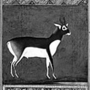 India: Black Buck Poster
