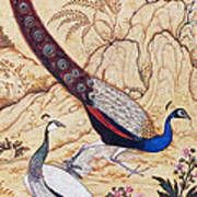 India: Peafowl, C1610 Poster
