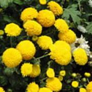 Indian Mums - Yellow Chaamanthi Poster