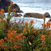 Indian Paintbrush At Point Lobos Poster