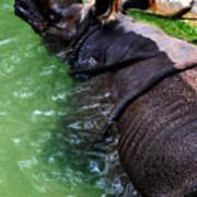 Indian Rhinoceros Poster