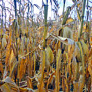 Indiana Corn 1 Poster