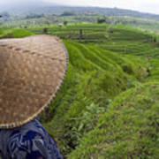 Indonesian Rice Farmer Poster