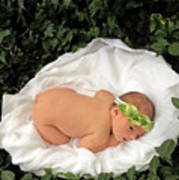 Newborn Infant Lying In Ivy Poster