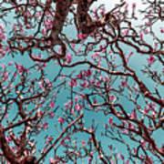 Infrared Frangipani Tree Poster
