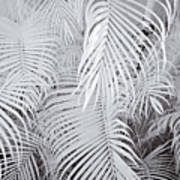 Infrared Palm Abstract Poster