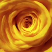 Inner Beauty Of A Rose Poster