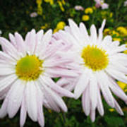 Inseparables Daisies Poster