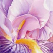 Inside Iris Poster