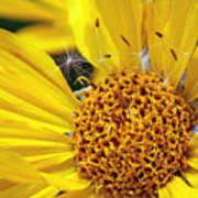 Inside Sunflower Poster