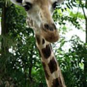 Inspector Giraffe Poster