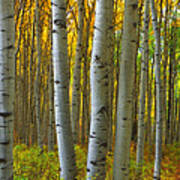 Into The Aspens Poster