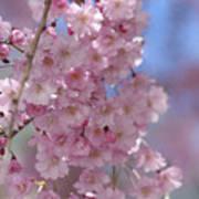Into The Sakura - Japanese Cherry Blossom Poster