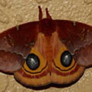 Io Moth Poster