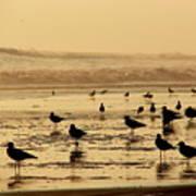 Iquique Chile Seagulls  Poster