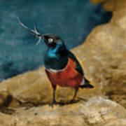 Iridescent Starling Poster