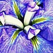 Iris 12 Poster