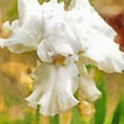 Iris 42 Poster