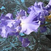 Iris Azulez Poster