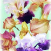 Iris Collage Poster