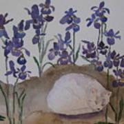 Iris Dreams Poster