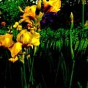 Iris Field In Abstract Poster