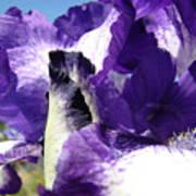 Iris Flower Art Print Purple Irises Botanical Floral Artwork Poster